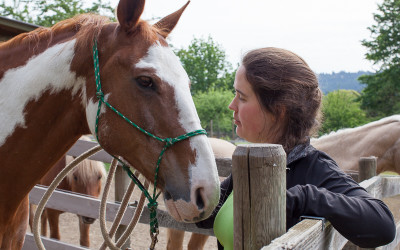 The Horse that's a Healer